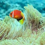 Aspetti simbolici e psicologici dell'immersione subacquea
